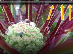 Use your own Photograph as your iPad Wallpaper